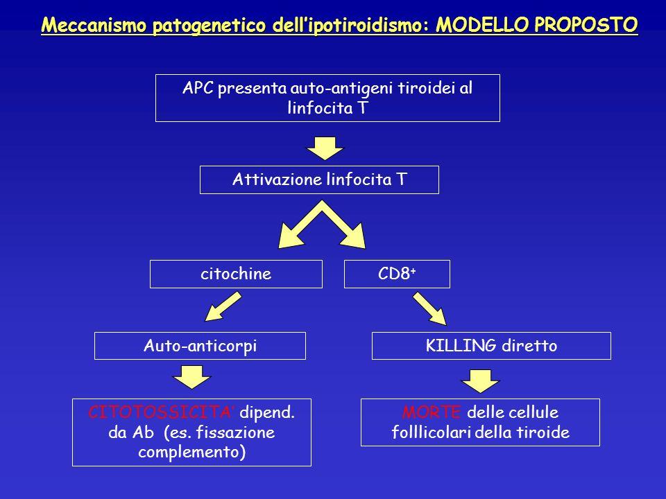 Meccanismo patogenetico dell'ipotiroidismo: MODELLO PROPOSTO