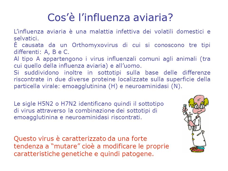 Cos'è l'influenza aviaria