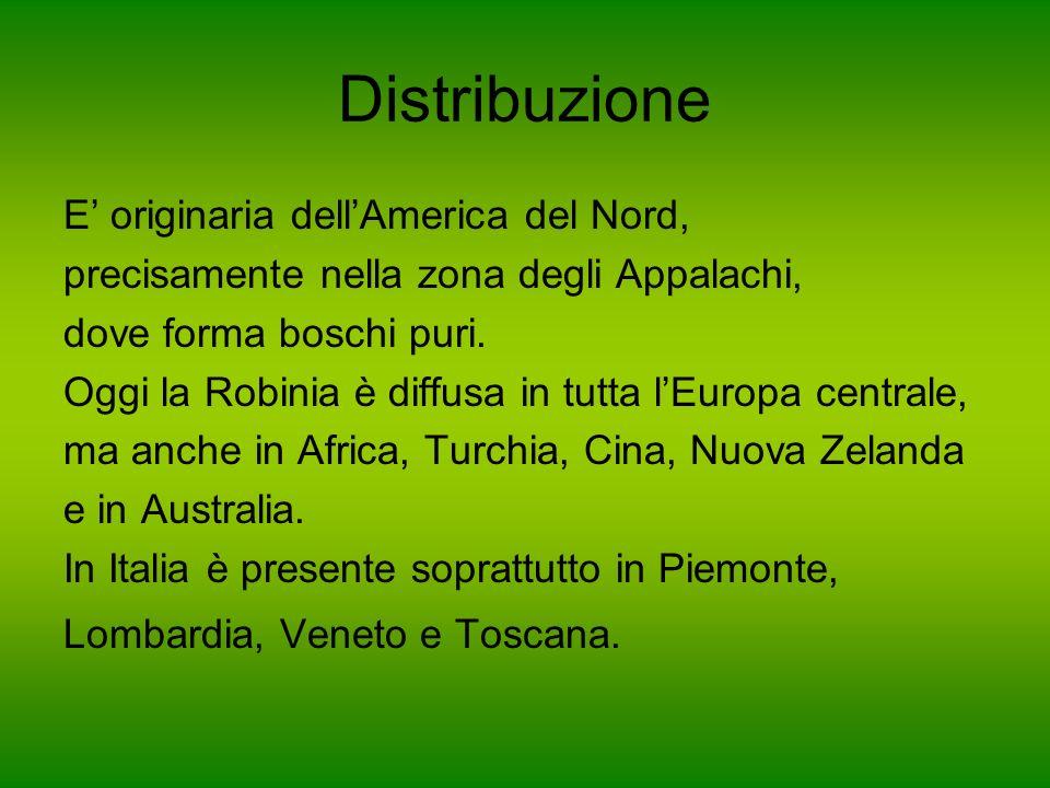Distribuzione E' originaria dell'America del Nord,