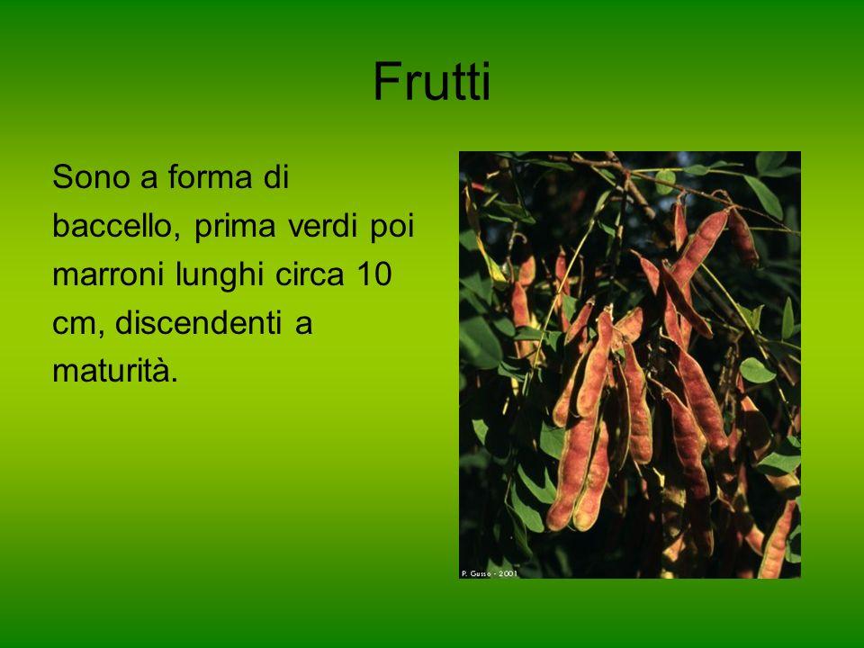Frutti Sono a forma di baccello, prima verdi poi