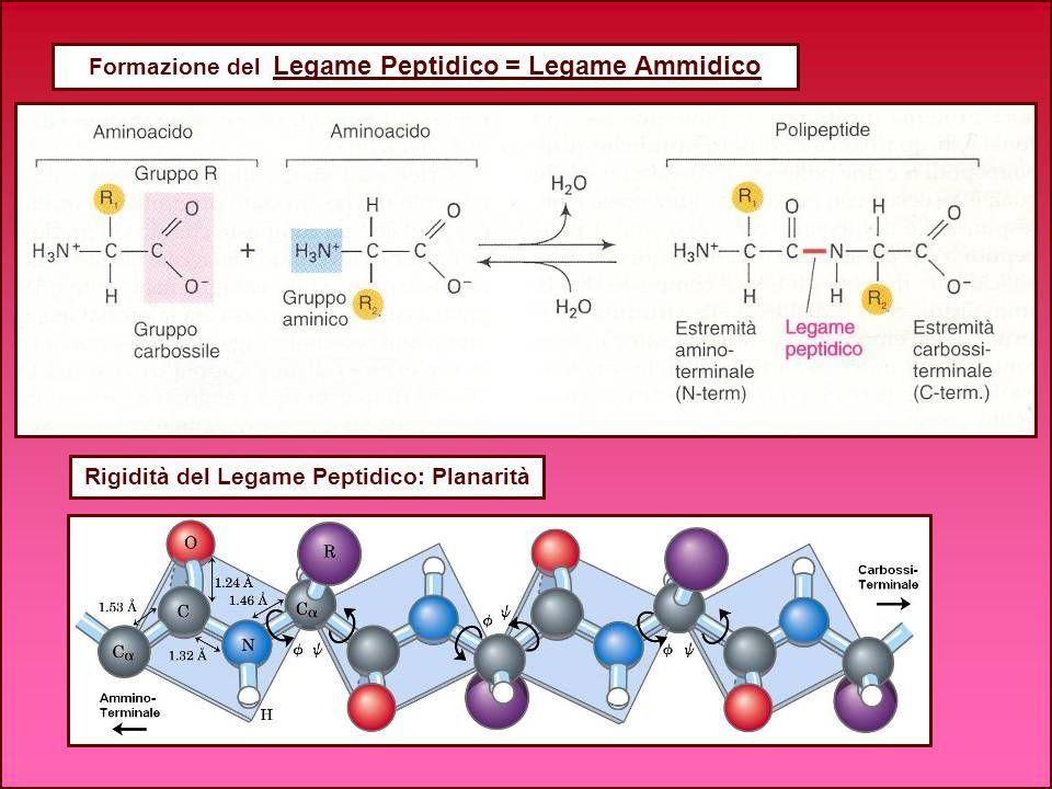 Formazione del Legame Peptidico = Legame Ammidico