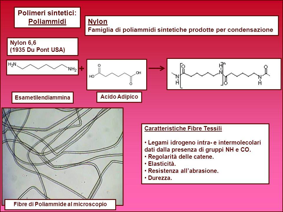 Polimeri sintetici: Poliammidi Fibre di Poliammide al microscopio