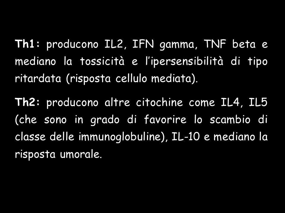 Th1: producono IL2, IFN gamma, TNF beta e mediano la tossicità e l'ipersensibilità di tipo ritardata (risposta cellulo mediata).