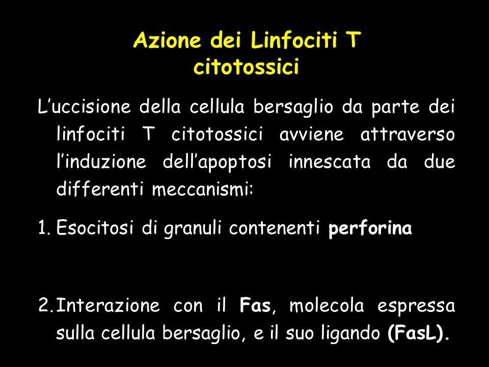 Azione dei Linfociti T citotossici