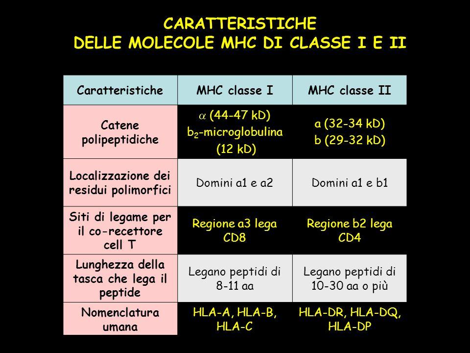 CARATTERISTICHE DELLE MOLECOLE MHC DI CLASSE I E II
