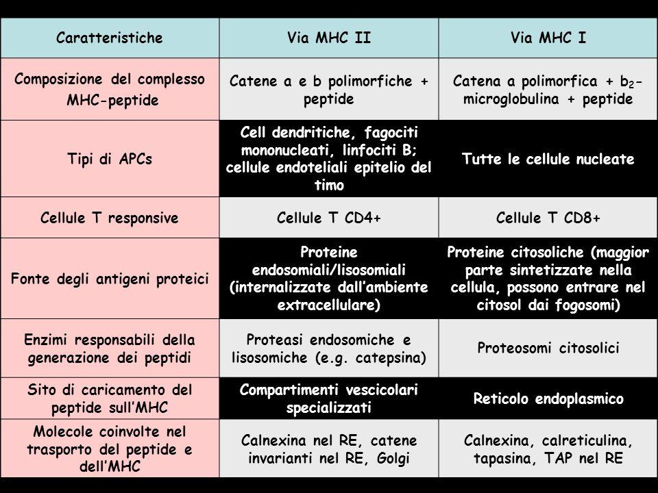 Composizione del complesso MHC-peptide