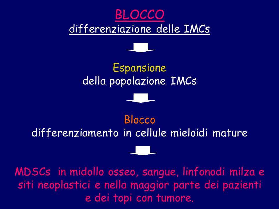 BLOCCO differenziazione delle IMCs Espansione della popolazione IMCs