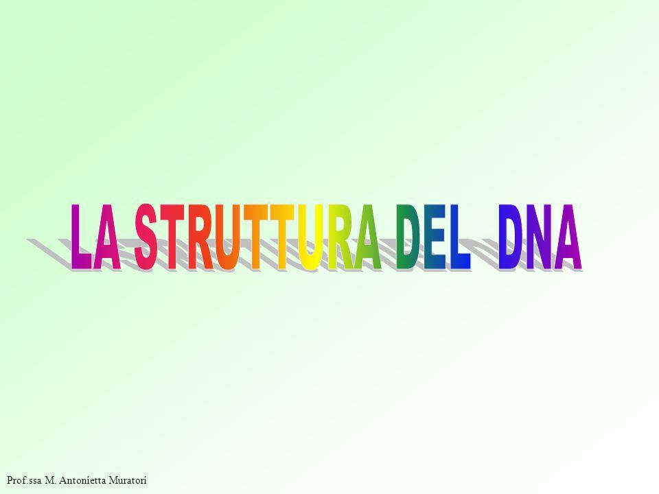 LA STRUTTURA DEL DNA Prof.ssa M. Antonietta Muratori