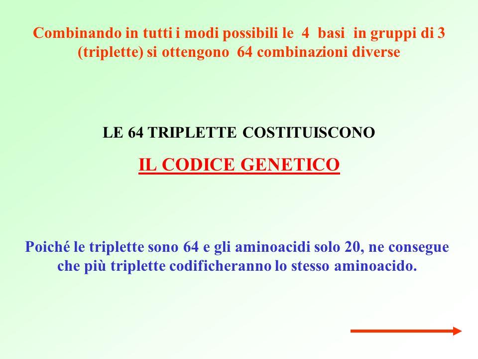LE 64 TRIPLETTE COSTITUISCONO