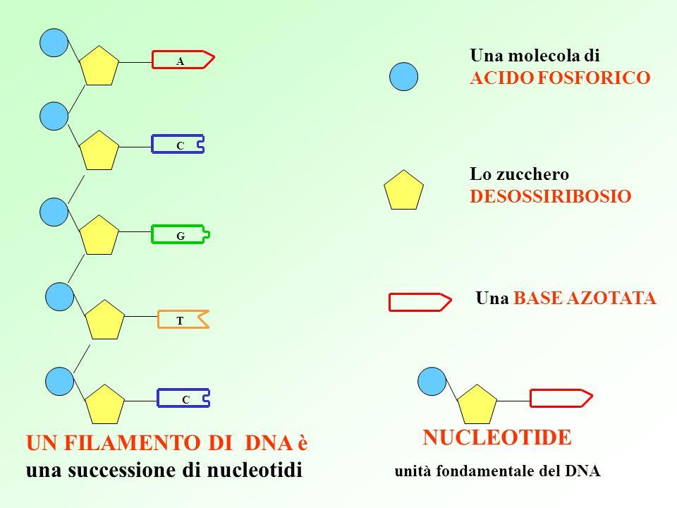 unità fondamentale del DNA