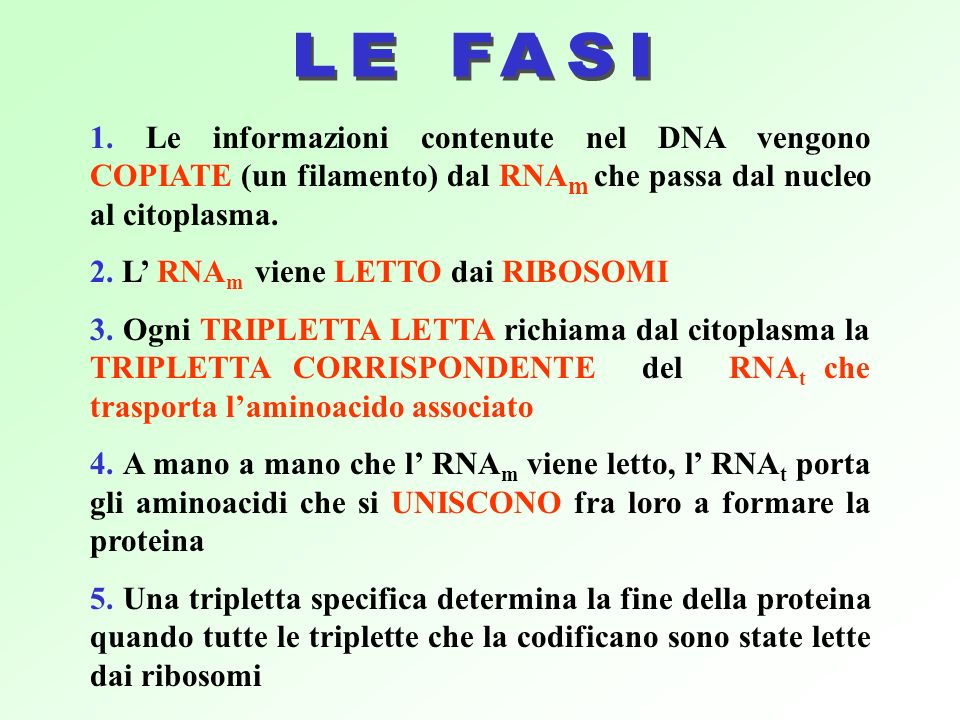 LE FASI 1. Le informazioni contenute nel DNA vengono COPIATE (un filamento) dal RNAm che passa dal nucleo al citoplasma.