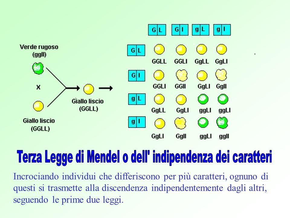 Terza Legge di Mendel o dell indipendenza dei caratteri