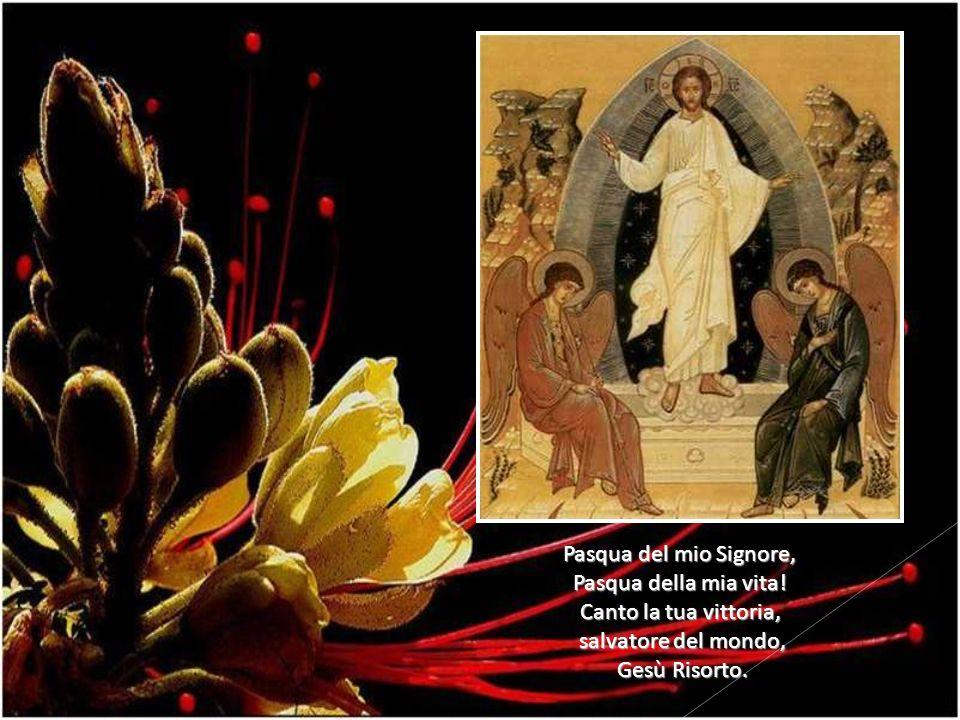 Pasqua del mio Signore, Pasqua della mia vita