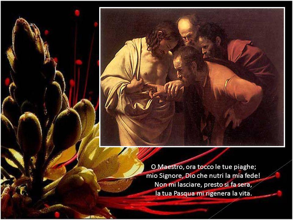 O Maestro, ora tocco le tue piaghe; mio Signore, Dio che nutri la mia fede! Non mi lasciare, presto si fa sera, la tua Pasqua mi rigenera la vita.