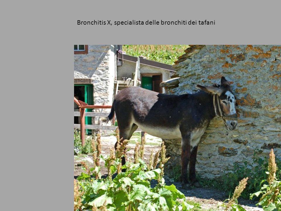 Bronchitis X, specialista delle bronchiti dei tafani