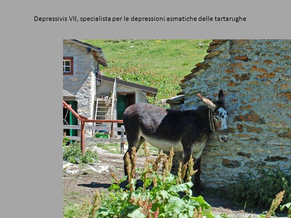 Depressivis VII, specialista per le depressioni asmatiche delle tartarughe