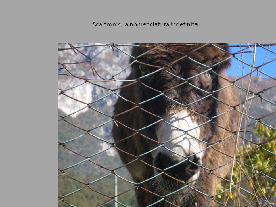 Scaltronis, la nomenclatura indefinita