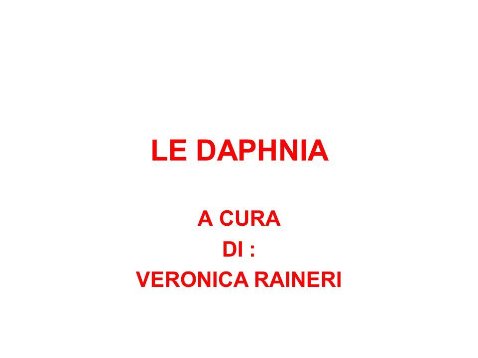 A CURA DI : VERONICA RAINERI