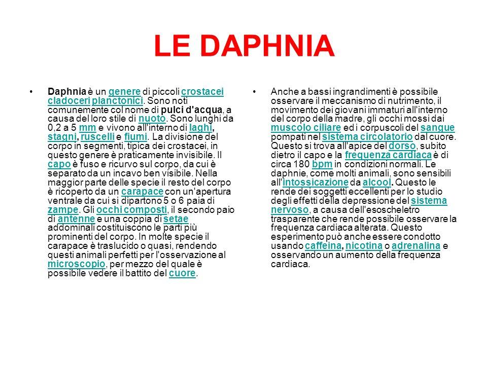 LE DAPHNIA
