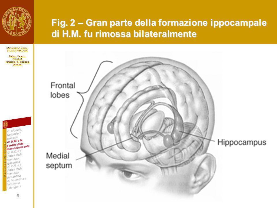 Fig. 2 – Gran parte della formazione ippocampale di H. M