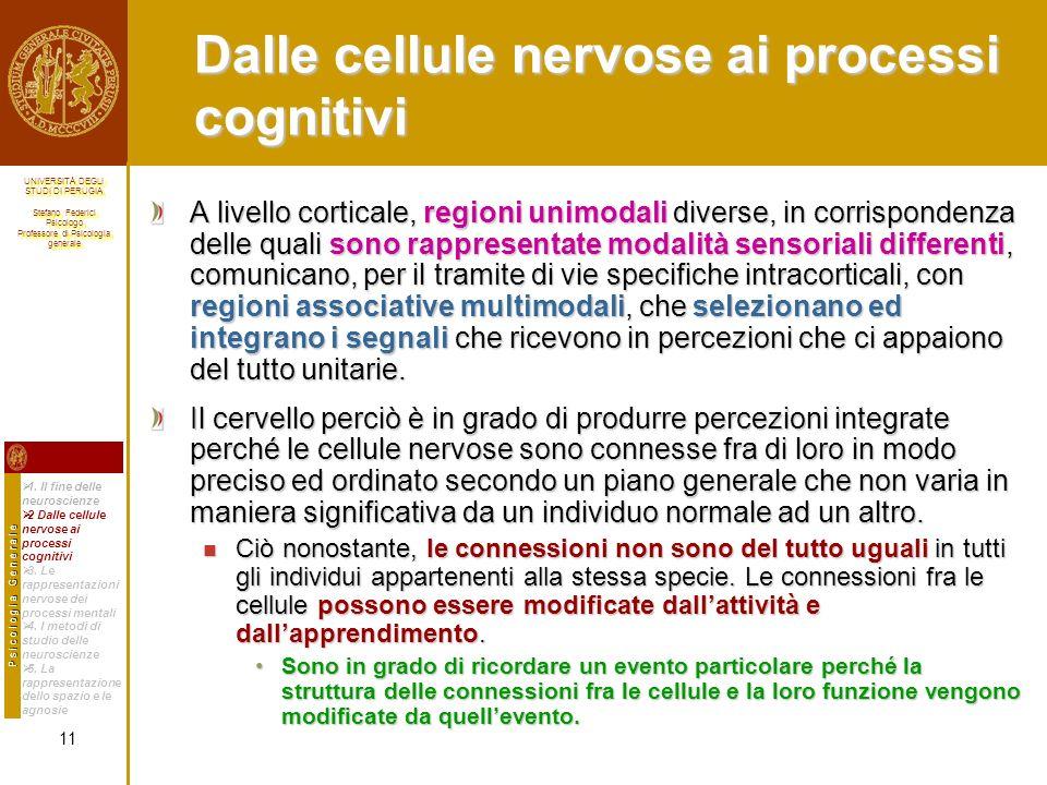 Dalle cellule nervose ai processi cognitivi