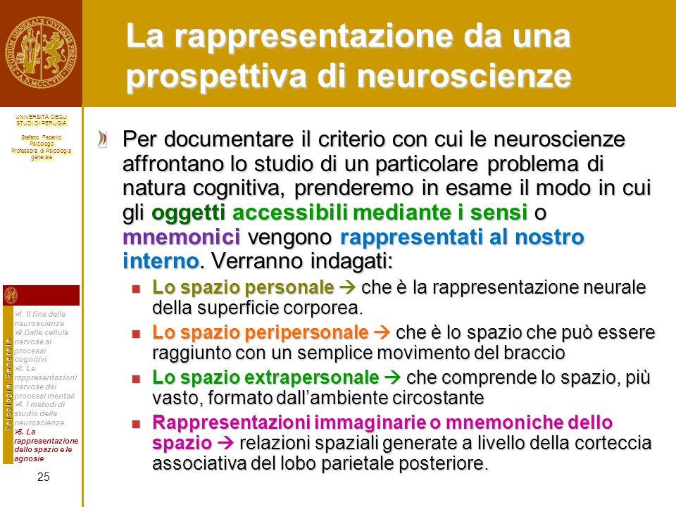 La rappresentazione da una prospettiva di neuroscienze