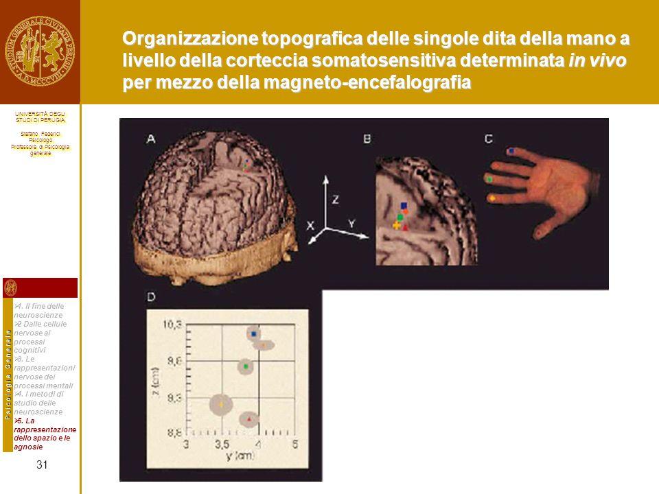 Organizzazione topografica delle singole dita della mano a livello della corteccia somatosensitiva determinata in vivo per mezzo della magneto-encefalografia