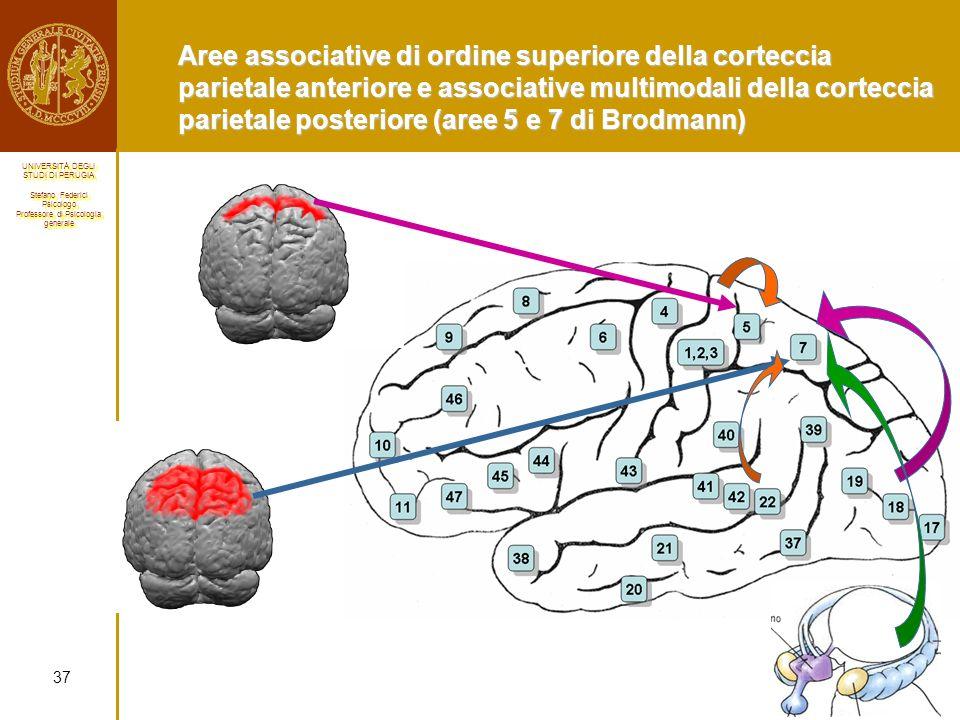 Aree associative di ordine superiore della corteccia parietale anteriore e associative multimodali della corteccia parietale posteriore (aree 5 e 7 di Brodmann)