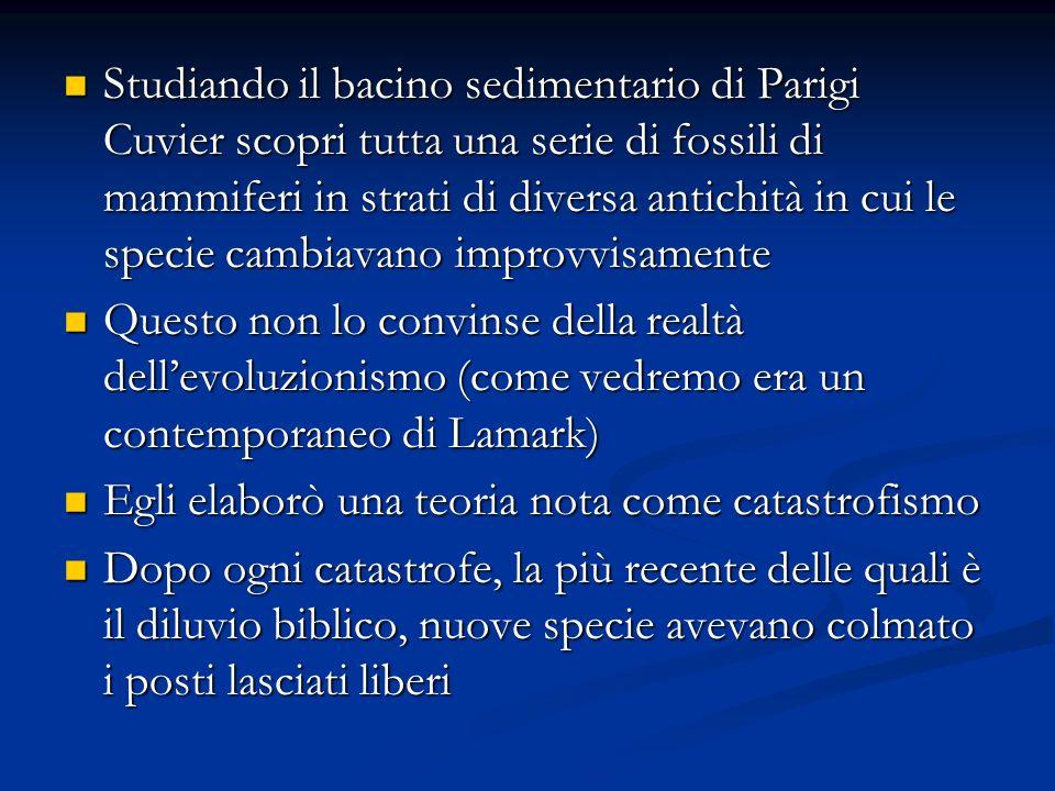 Studiando il bacino sedimentario di Parigi Cuvier scopri tutta una serie di fossili di mammiferi in strati di diversa antichità in cui le specie cambiavano improvvisamente