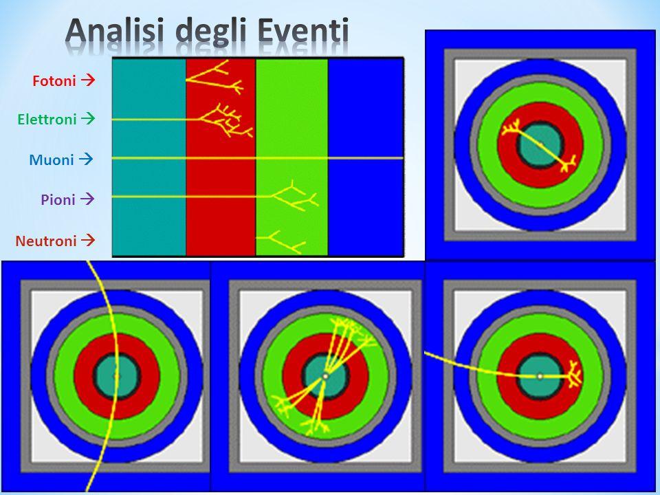 Analisi degli Eventi Fotoni  Elettroni  Muoni  Pioni  Neutroni 