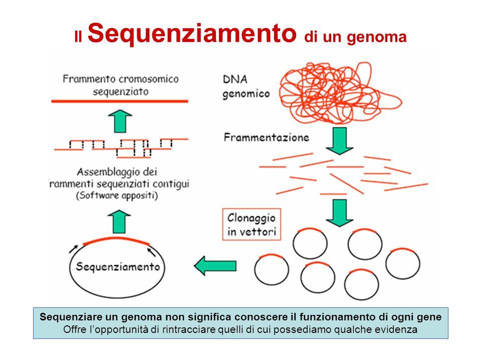 Il Sequenziamento di un genoma