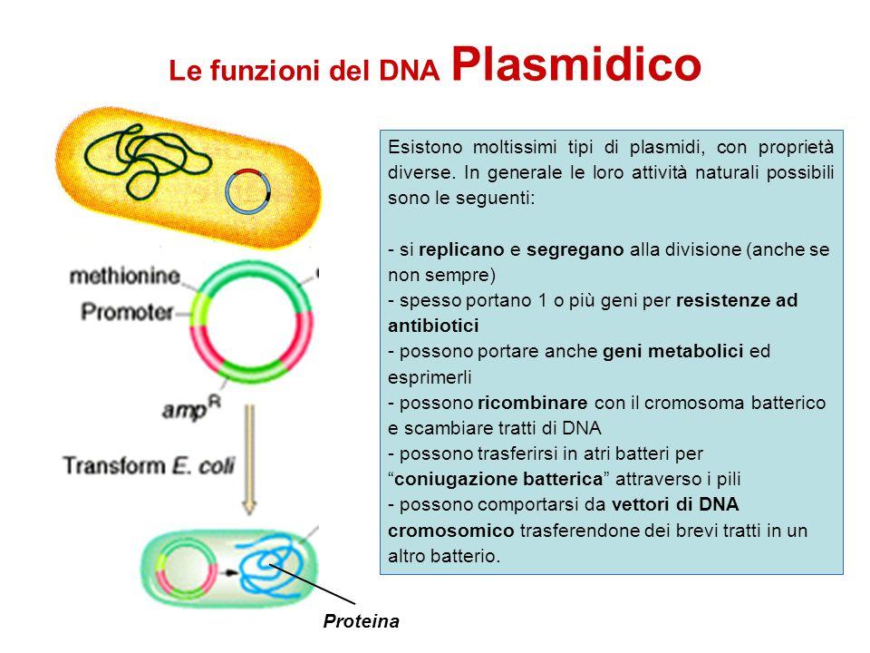 Le funzioni del DNA Plasmidico