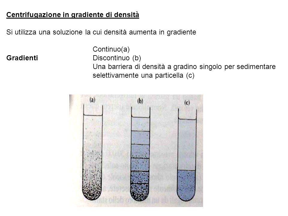 Centrifugazione in gradiente di densità