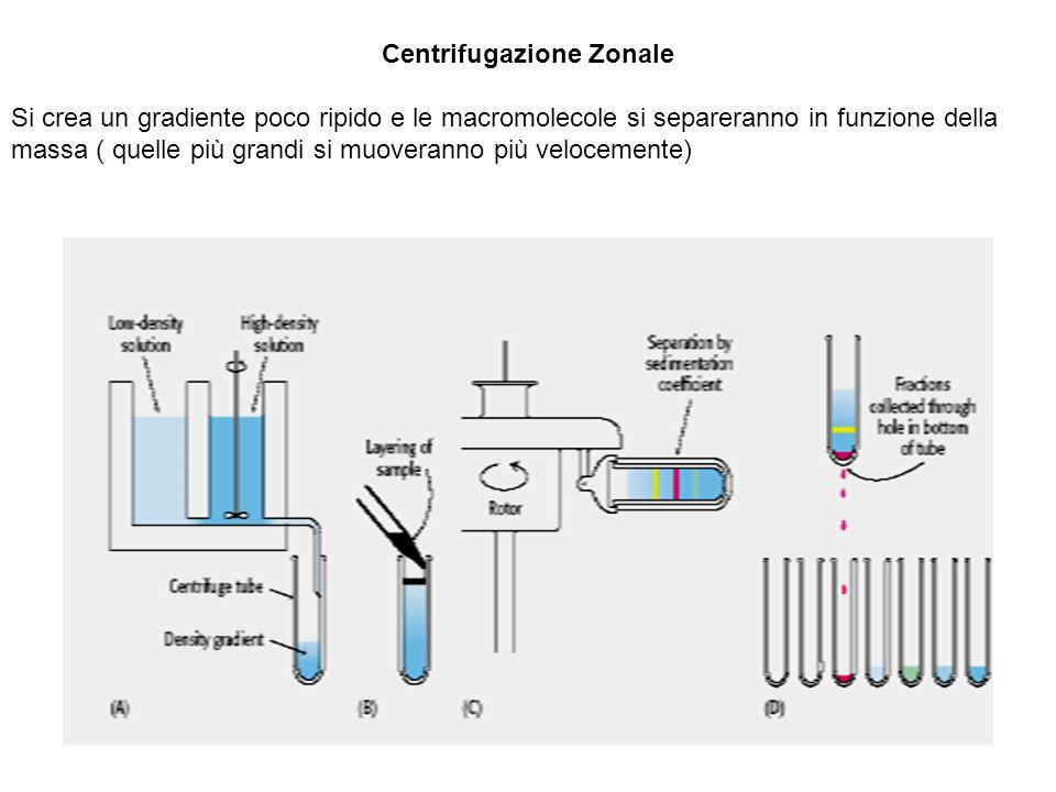 Centrifugazione Zonale