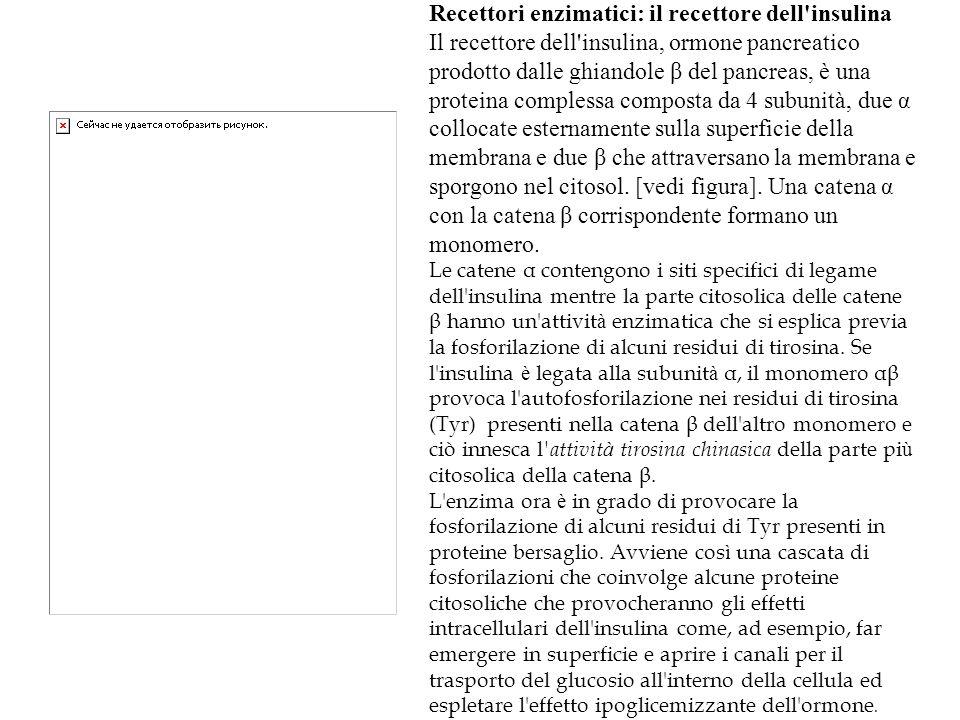 Recettori enzimatici: il recettore dell insulina