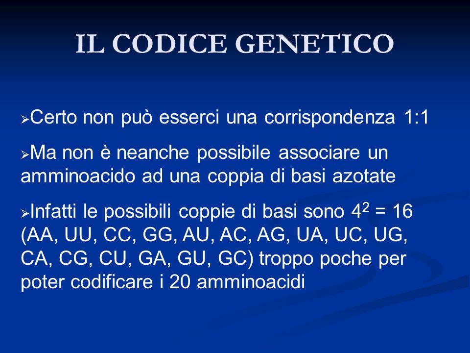IL CODICE GENETICO Certo non può esserci una corrispondenza 1:1