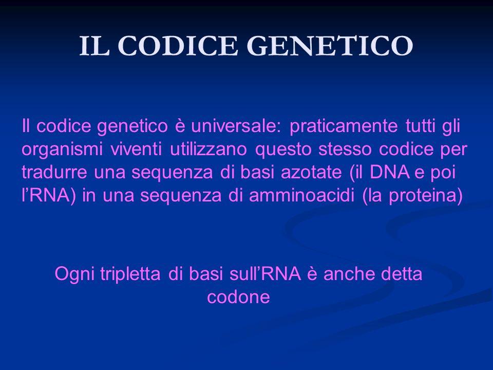 Ogni tripletta di basi sull'RNA è anche detta codone