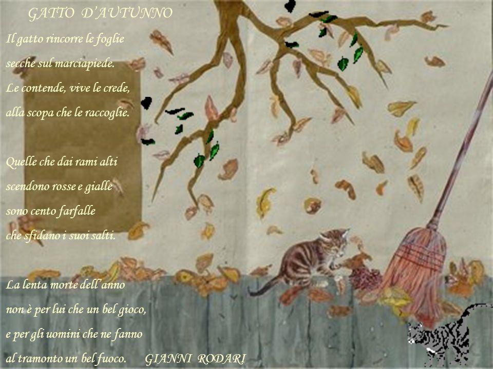 GATTO D'AUTUNNO Il gatto rincorre le foglie secche sul marciapiede.