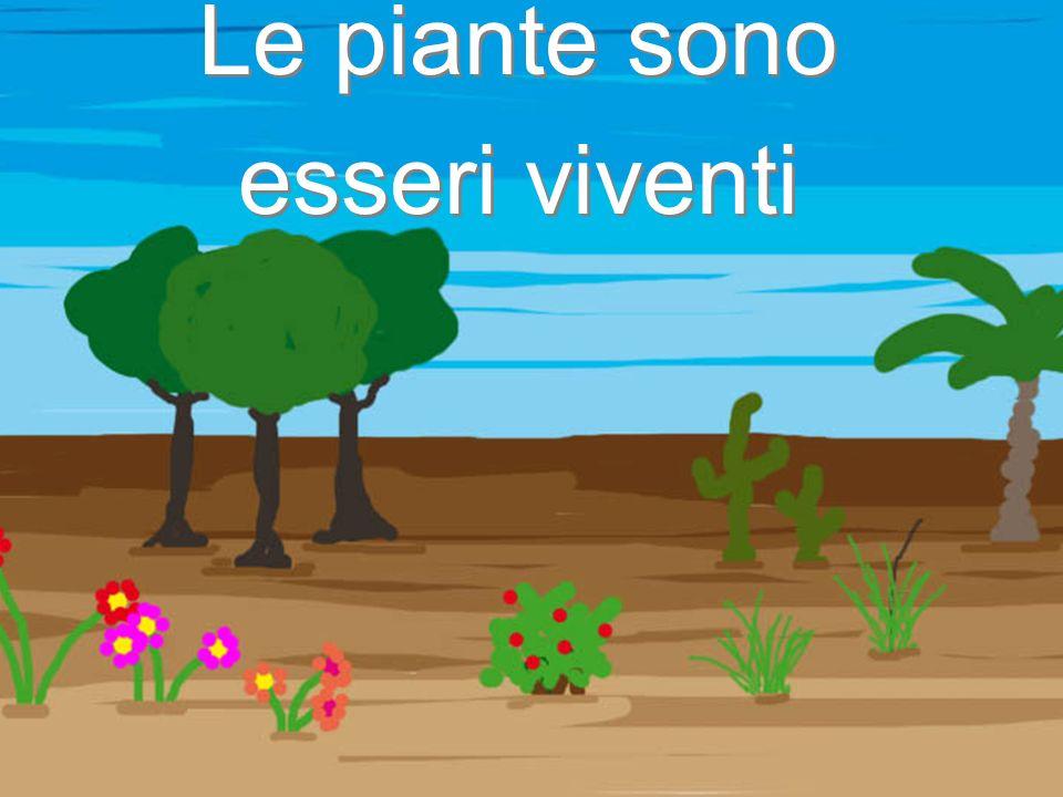 Le piante sono esseri viventi