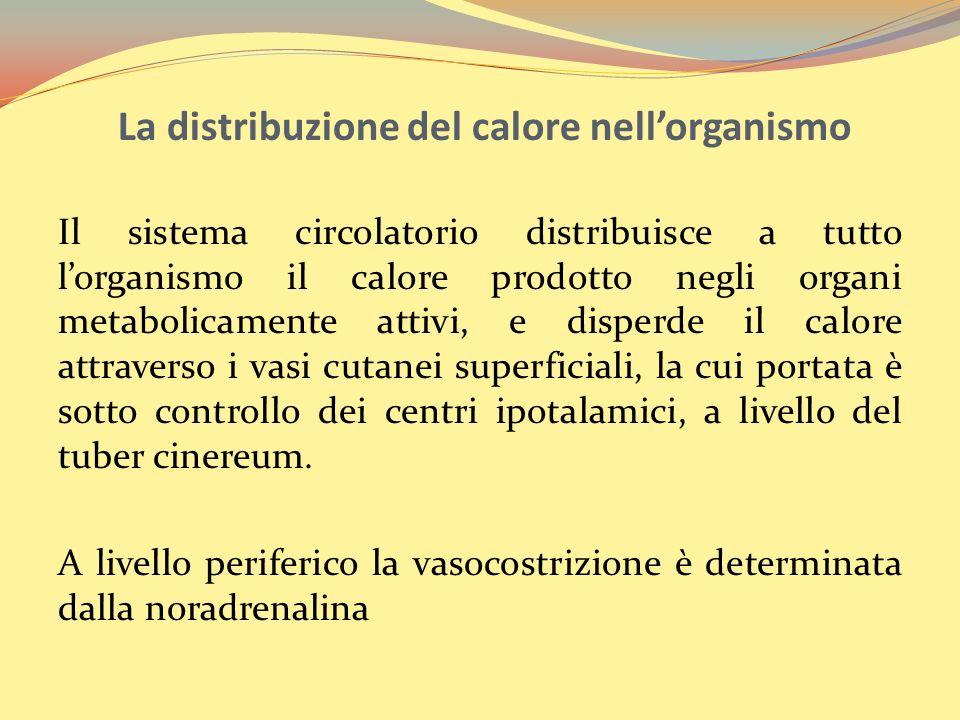 La distribuzione del calore nell'organismo