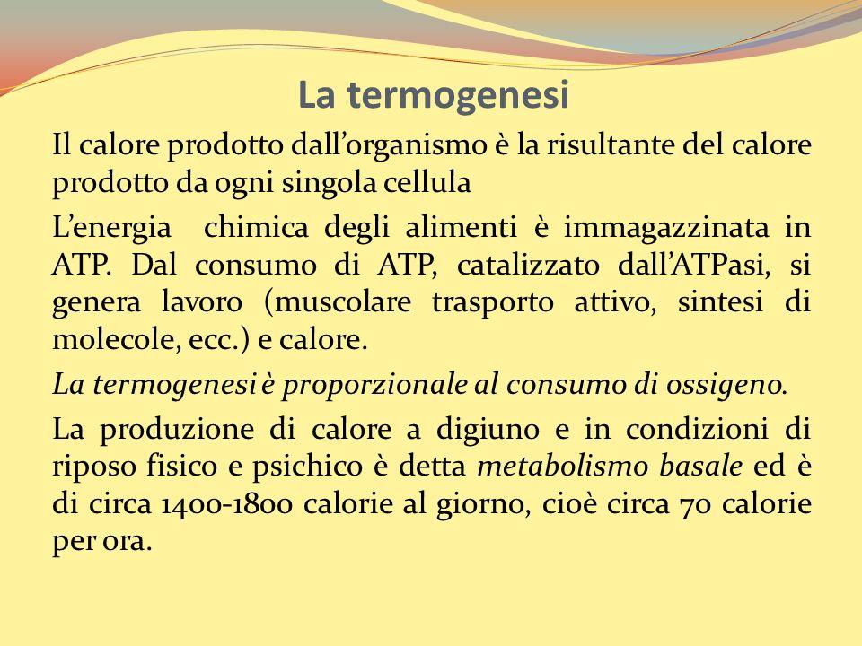 La termogenesi Il calore prodotto dall'organismo è la risultante del calore prodotto da ogni singola cellula.