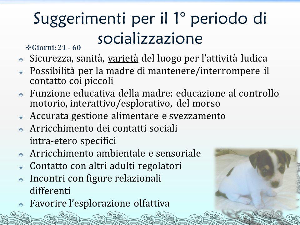 Suggerimenti per il 1° periodo di socializzazione