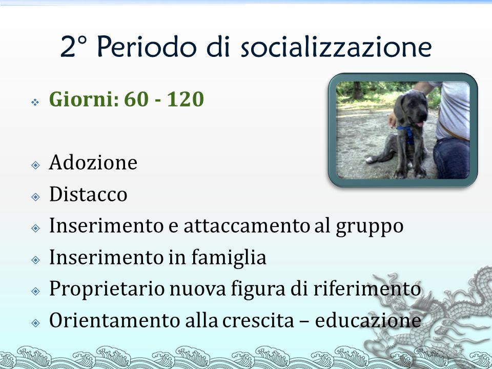 2° Periodo di socializzazione