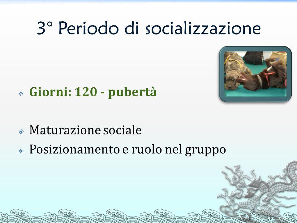 3° Periodo di socializzazione