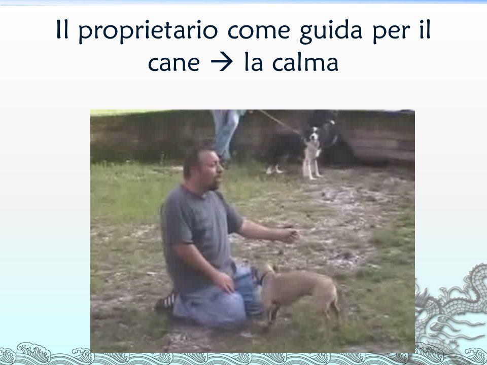 Il proprietario come guida per il cane  la calma