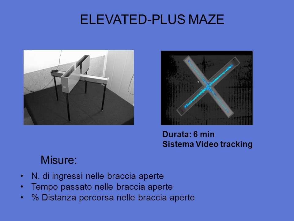 ELEVATED-PLUS MAZE Misure: N. di ingressi nelle braccia aperte