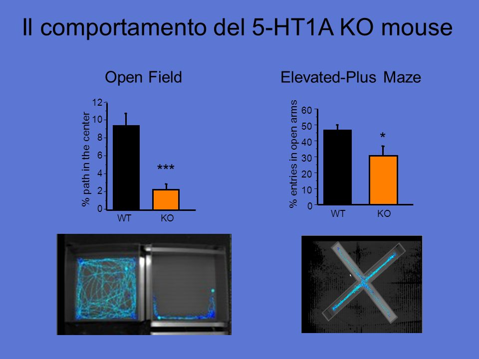 Il comportamento del 5-HT1A KO mouse