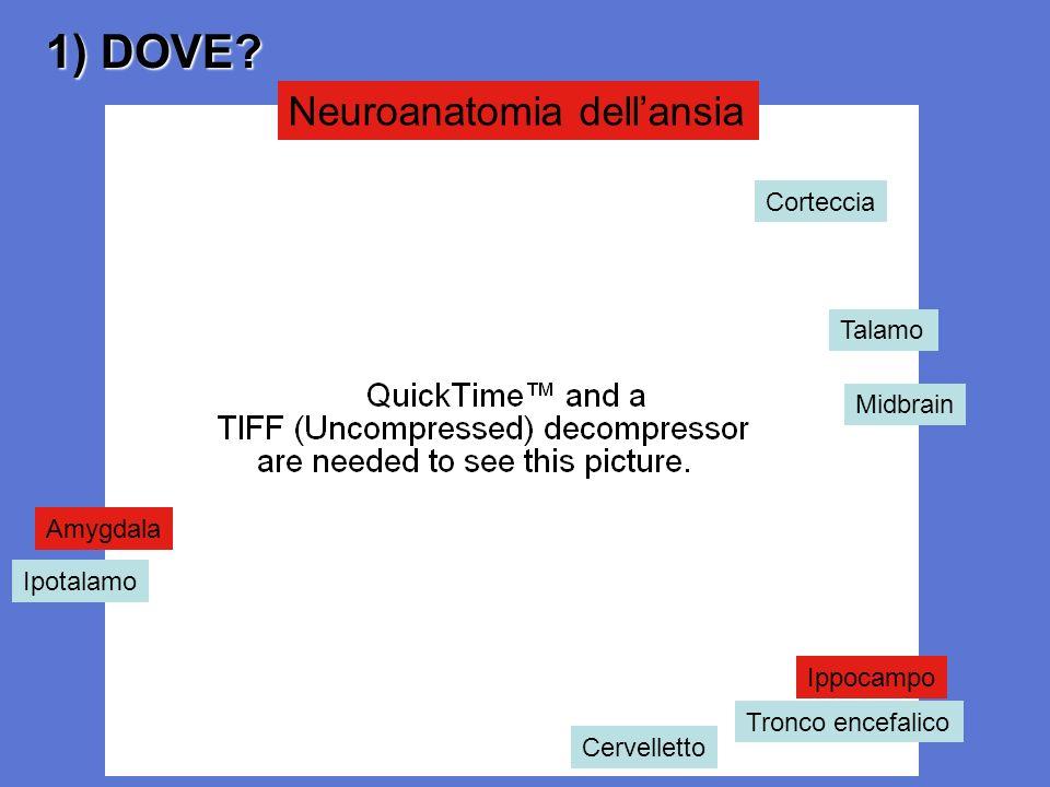 1) DOVE Neuroanatomia dell'ansia Corteccia Talamo Midbrain Amygdala