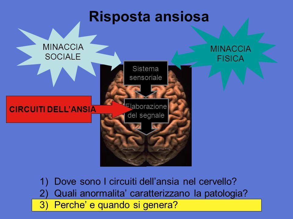 Risposta ansiosa Dove sono I circuiti dell'ansia nel cervello