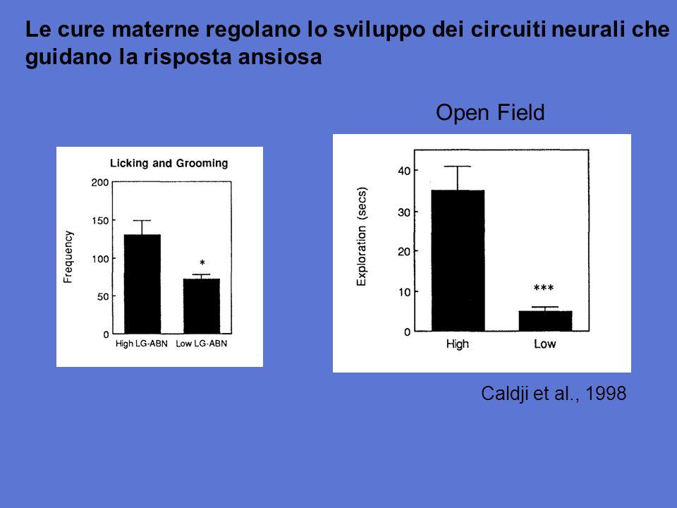Le cure materne regolano lo sviluppo dei circuiti neurali che guidano la risposta ansiosa